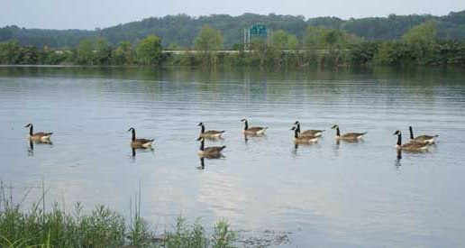 soddy-daisy-public-services-duck-pond